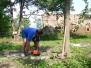 Odřezávání pařezů na zahradě Janova hradu 22. a 27.5.2014