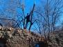 Vykácení náletových dřevin z objektu zříceniny 23.3.2013